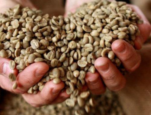 Kaffee kochen – die richtige Temperatur entscheidet