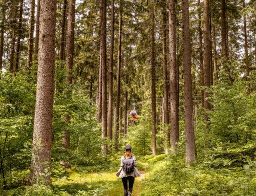 Entdecken Sie den Harz