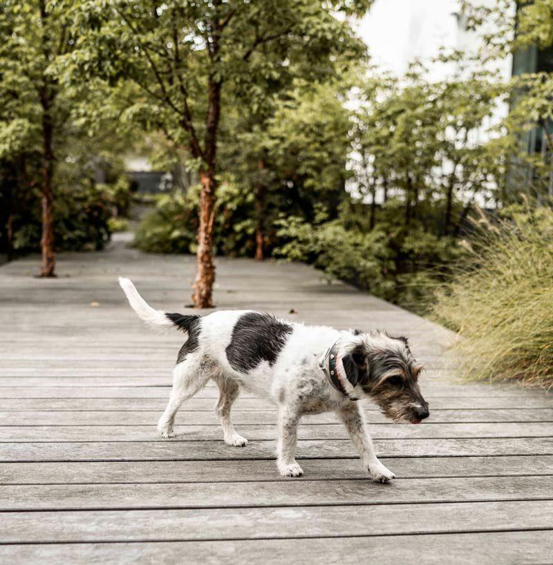 Hund von Franziska Brinkmann Wiltfang