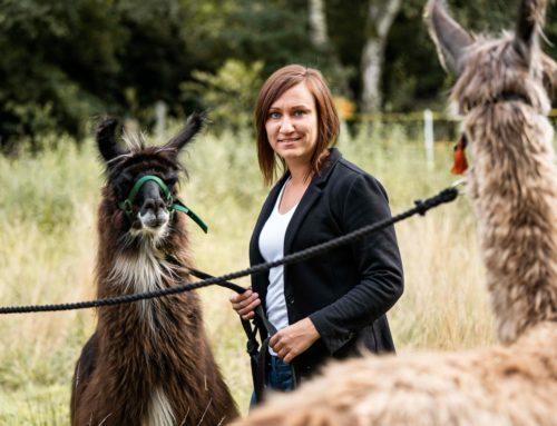 Coaching und Workshops mit Lamas