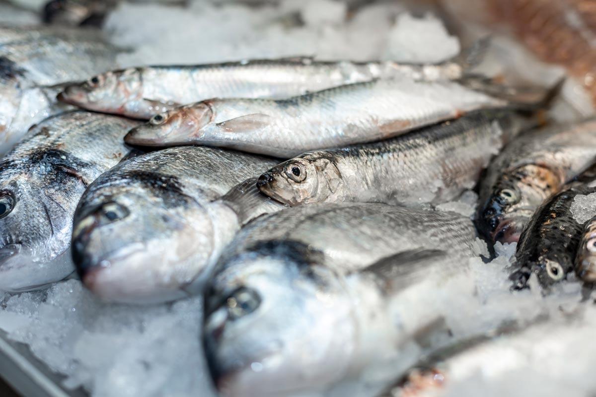 Auslage Bei Fisch Müller