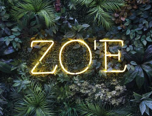 Internationaler Genuss im Restaurant ZO'E